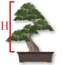 hauteur arbre pot
